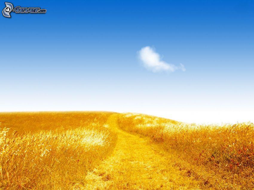 polna droga, pole, czyste niebo