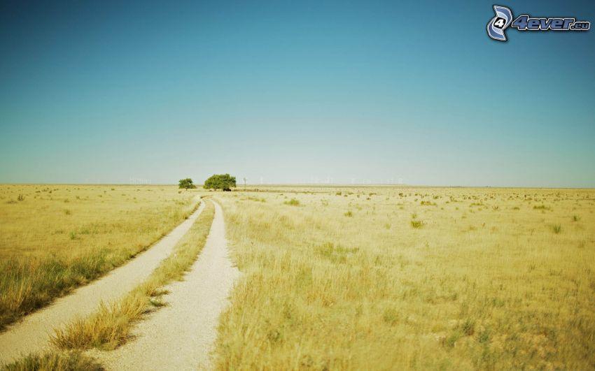 polna droga, pole, drzewa
