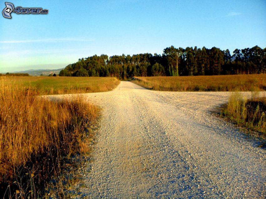 polna droga, skrzyżowanie, las