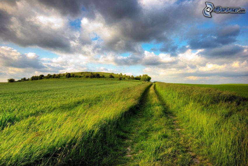 polna droga, zielona trawa, chmury