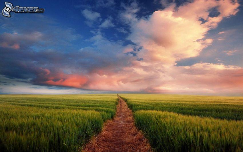 polna droga, zielone zbożowe pole, chmury