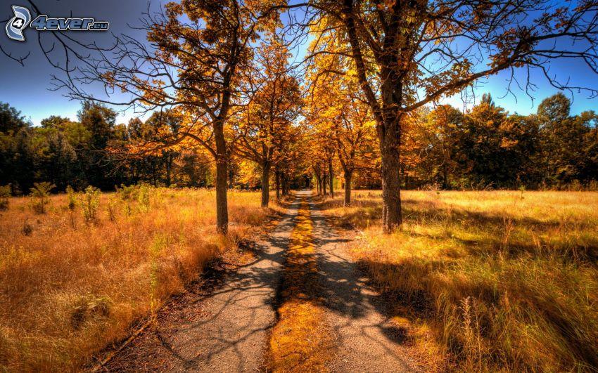 polna droga, żółte drzewa
