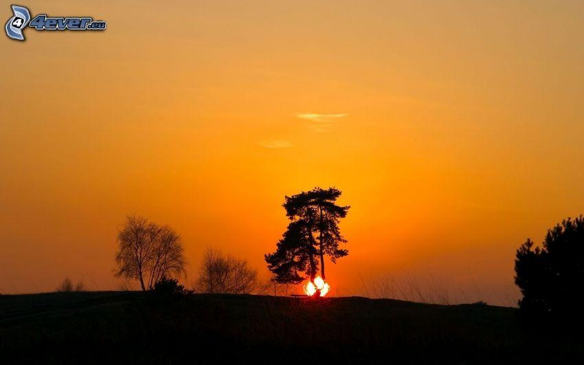 pomarańczowy zachód słońca, sylwetki drzew, pomarańczowe niebo, zachód słońca za drzewem