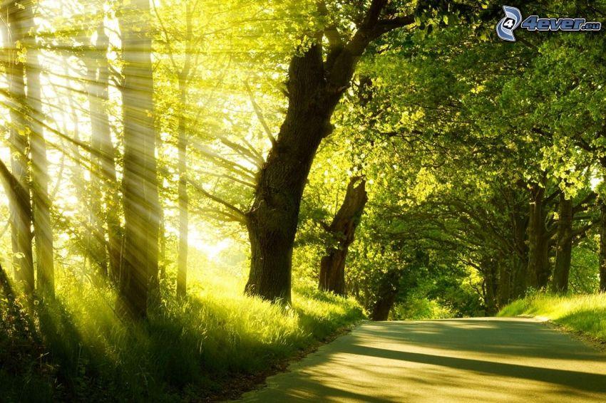 promienie słoneczne, Droga przez las, zielone drzewa