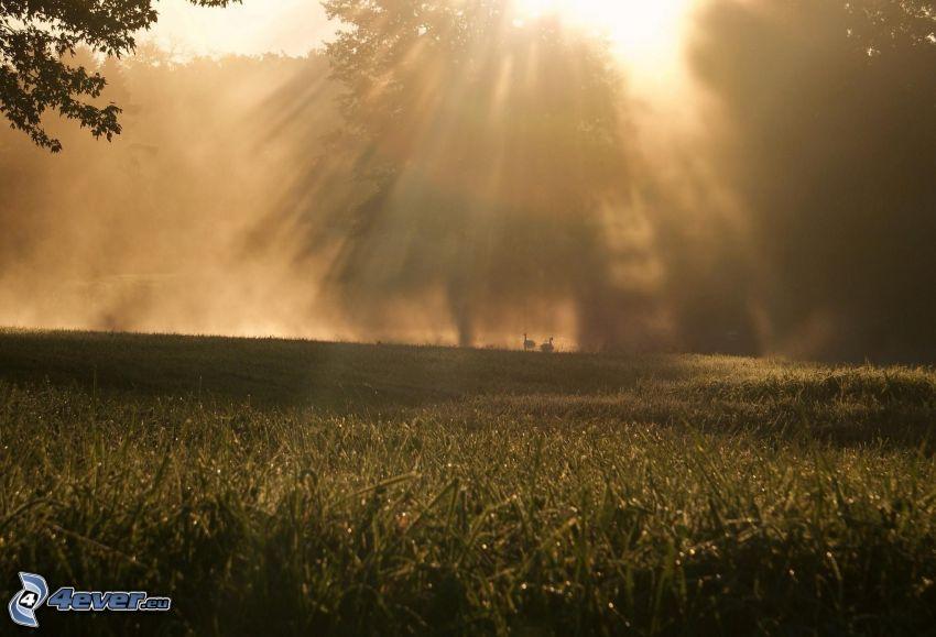 promienie słoneczne, drzewa, łąka