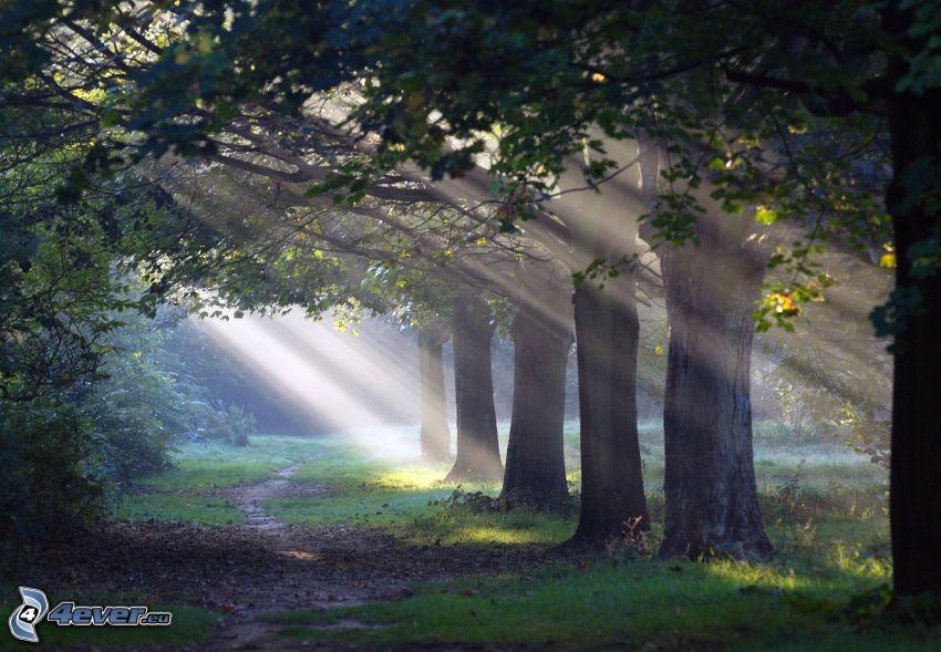 promienie słoneczne, drzewa, leśna ścieżka