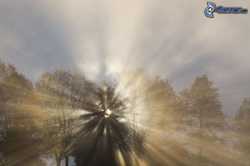 promienie słoneczne, drzewa