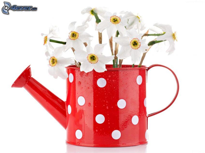 białe kwiaty, konewka
