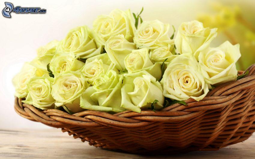 białe róże, koszyk