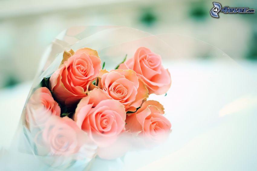 bukiet róż, różowe róże