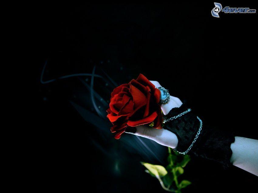 czerwona róża, ręka