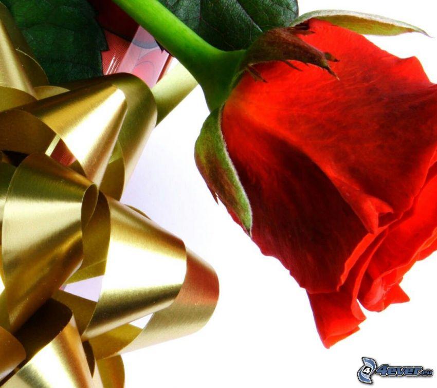 czerwona róża, wstążka