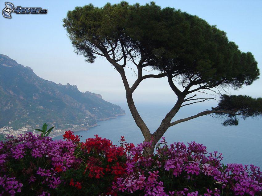 drzewo, kwiaty, morze, wybrzeże