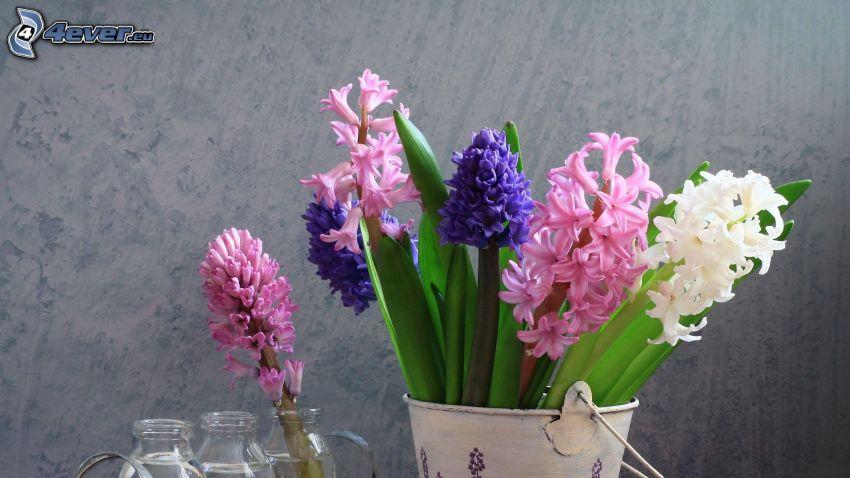 hiacynty, kwiaty, wazon