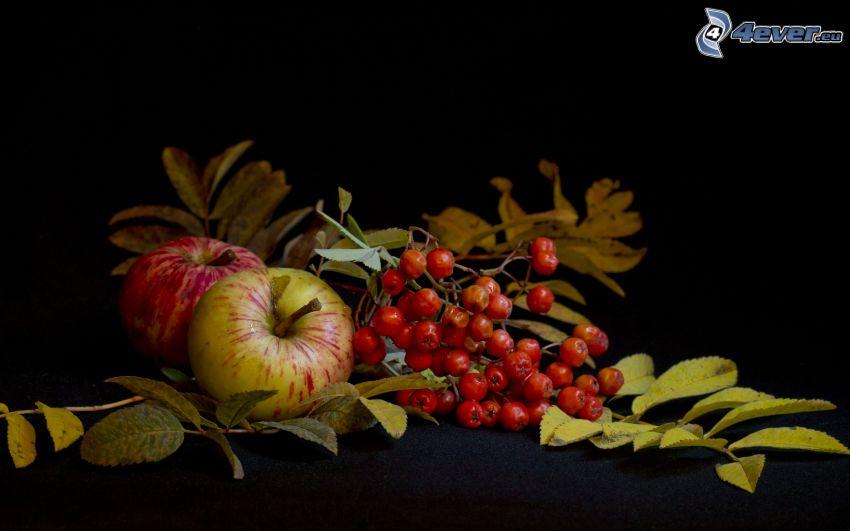 jarzębina, jabłka, zielone liście