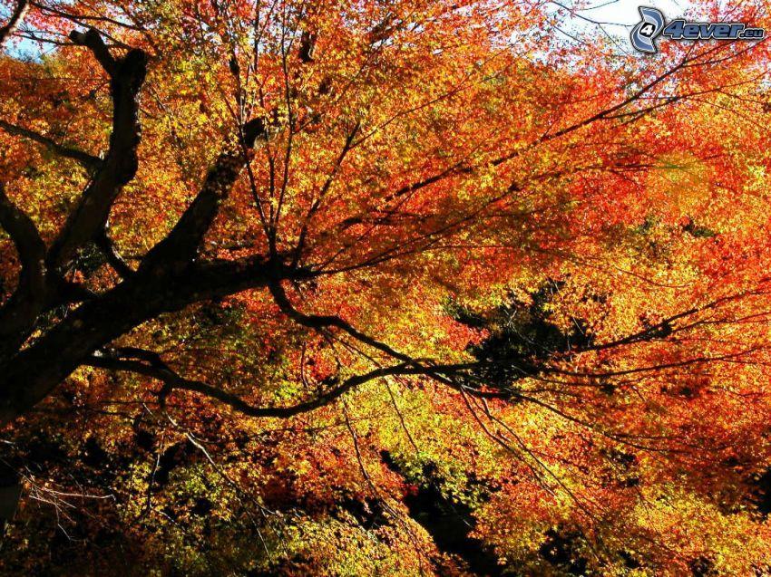 kolorowe drzewa, jesienne drzewo