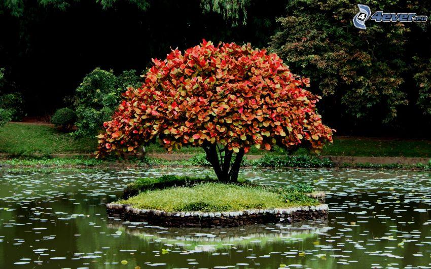 kolorowe drzewa, wysepka, staw hodowlany