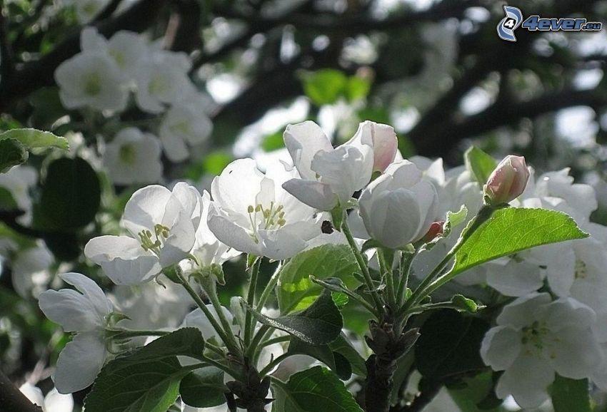 kwitnące gałązki