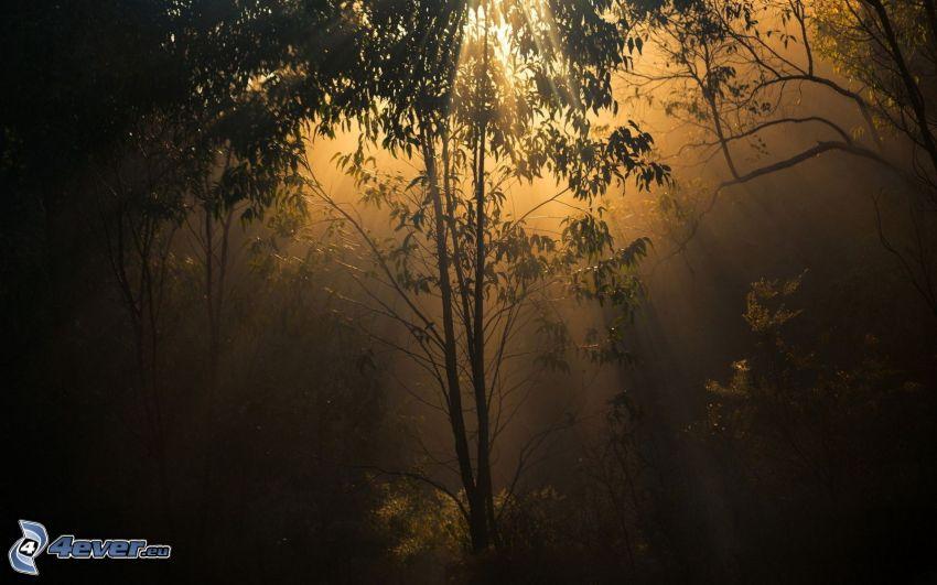 las, promienie słoneczne, krzewy