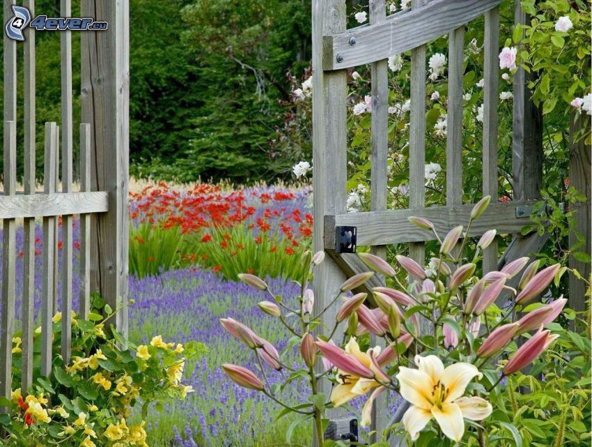 lilie, drewniana brama, lawenda, czerwone kwiaty