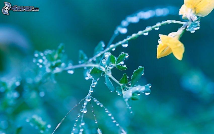 makro, roślina, krople wody
