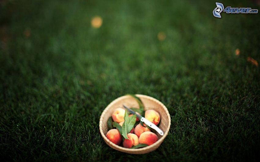 brzoskwinie, trawnik