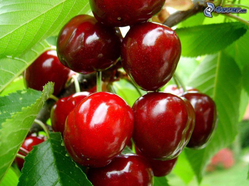 czerwone czereśnie, owoc, liście
