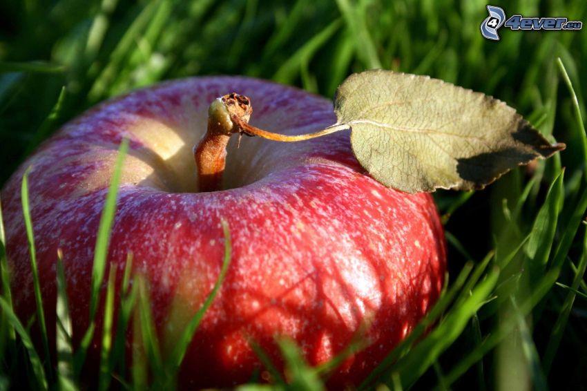 czerwone jabłko, trawa