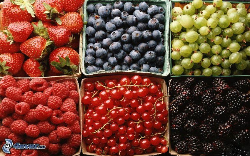 owoce leśne, truskawki, jagody, agrest, maliny, czerwone porzeczka, morwa