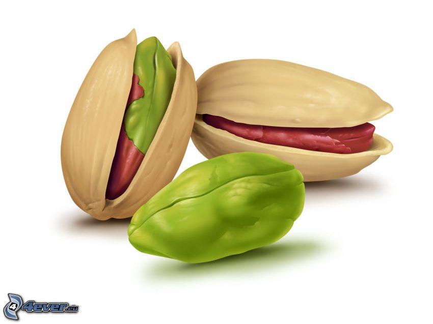 pistacje, rysowane