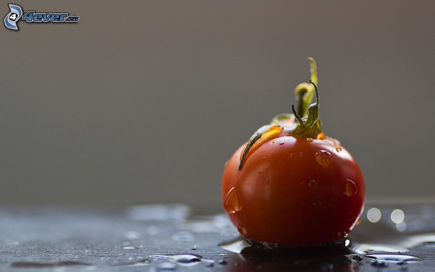 pomidor, krople wody
