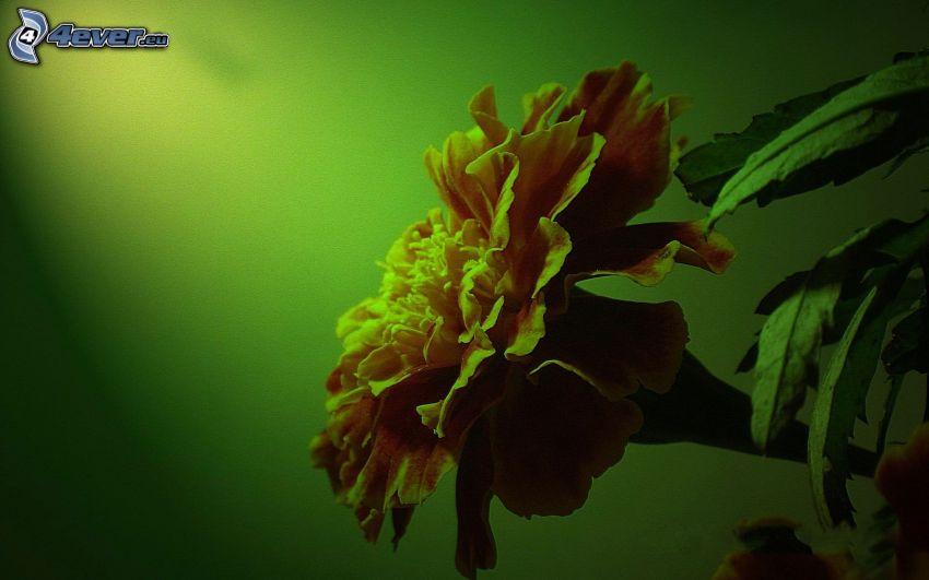 pomarańczowy kwiat