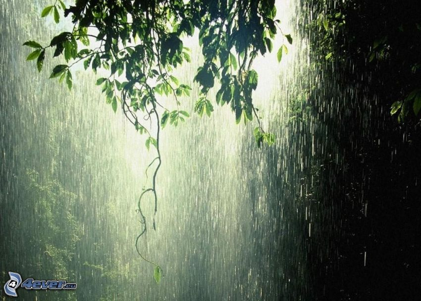roślina, deszcz