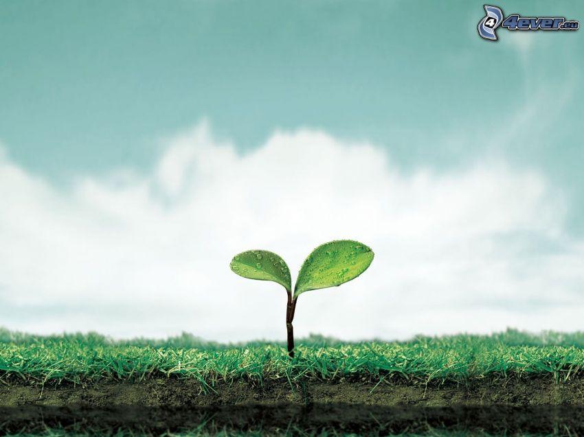 roślina, liście, ziemia, niebo