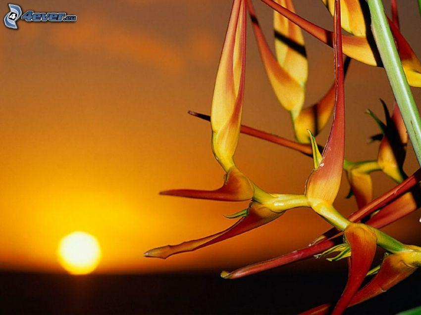 roślina, zachód słońca