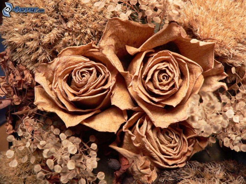 róże, suche kwiaty