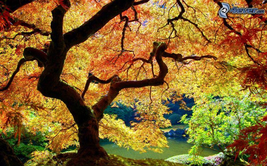 rozgałęzione drzewo, kolorowe drzewa, jesień