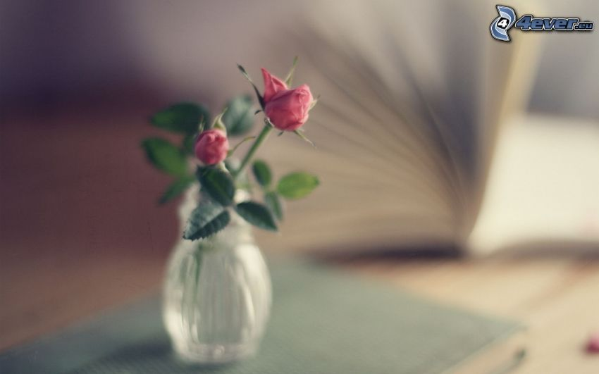 różowe róże, wazon