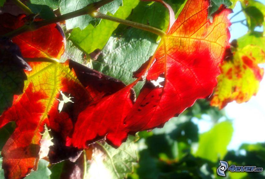 suche liście