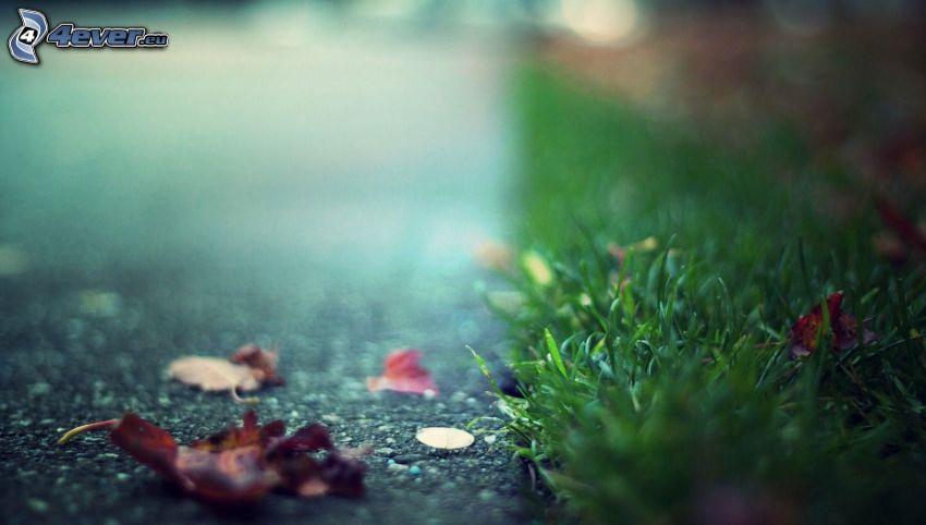 trawa, opadnięte liście