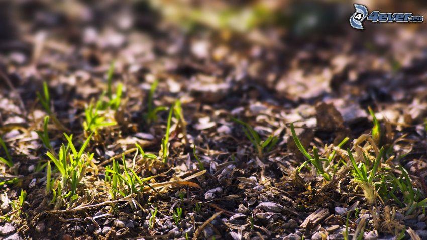 trawa, ziemia
