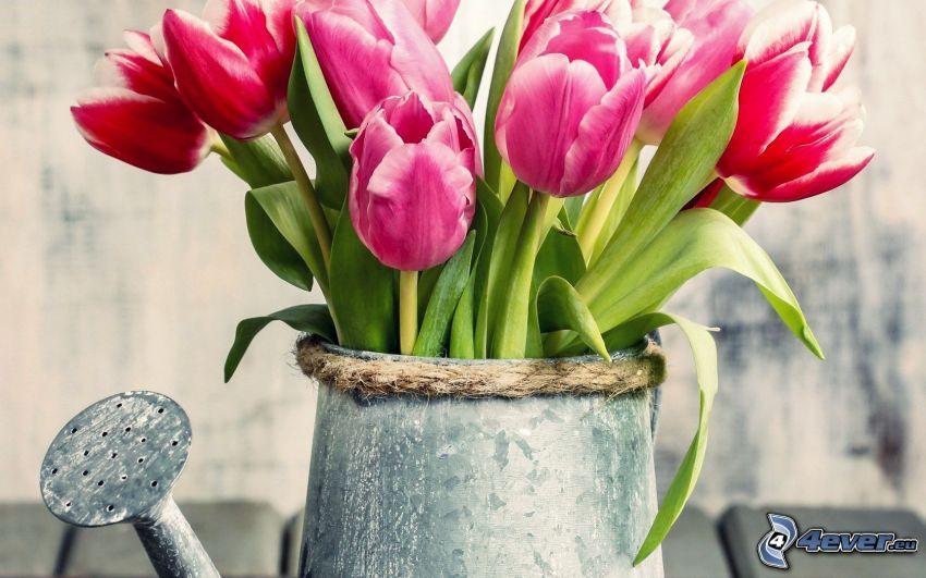 tulipany, konewka