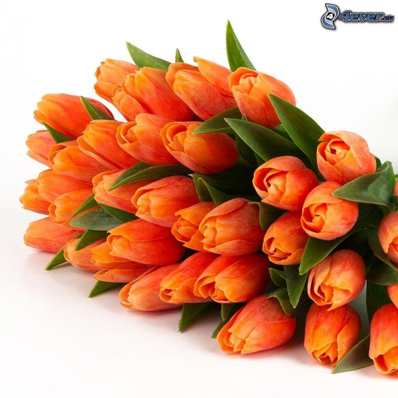 tulipany, pomarańczowy kwiat, zielone liście