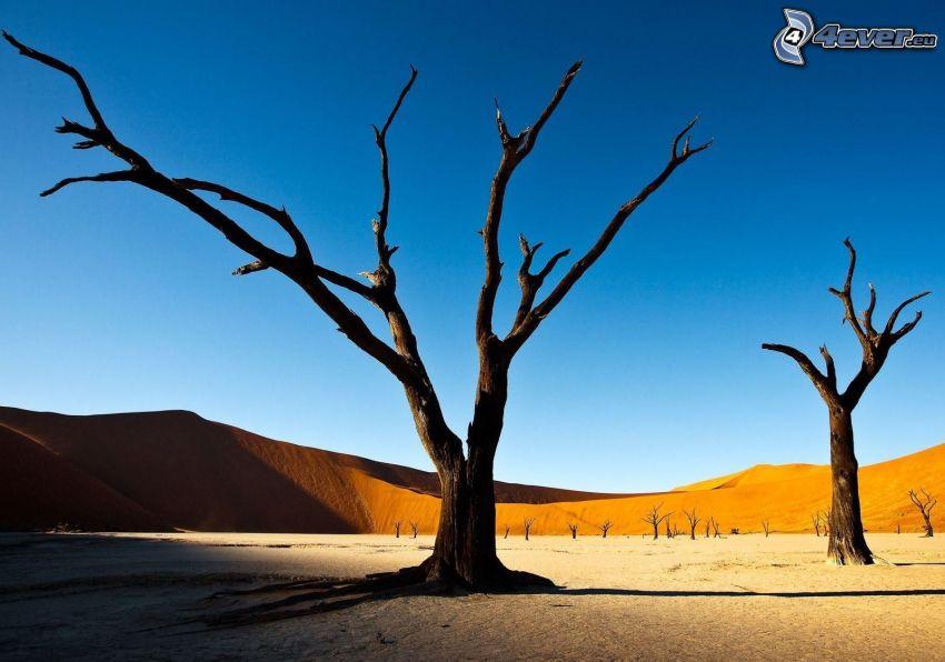 wyschnięte drzewa, pustynia