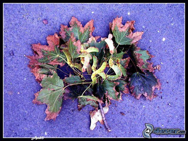 zielnik, suche liście