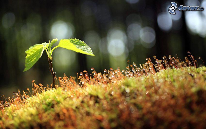 zielone liście, mech, makro