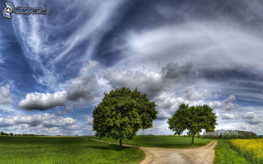 rozdroże, drzewa, polna droga, chmury, łąka