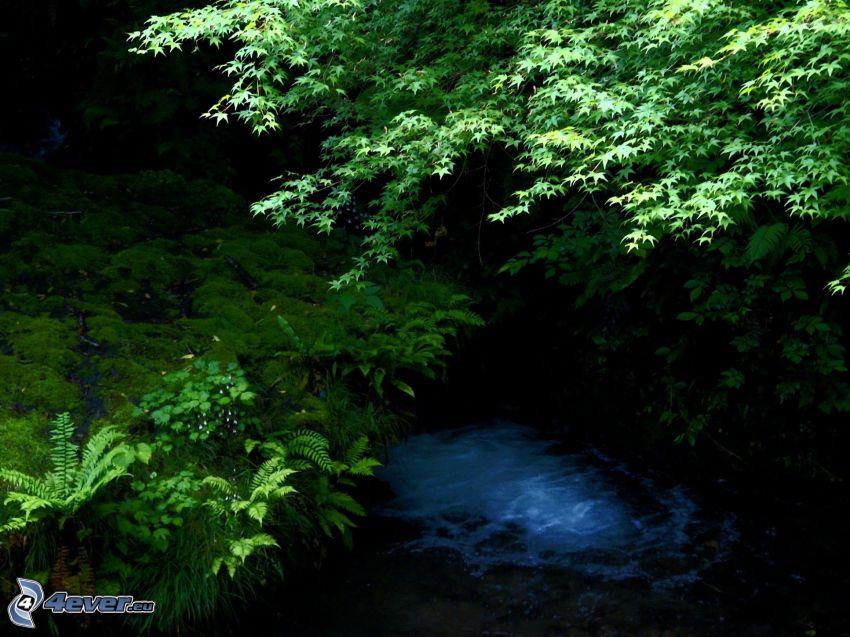 rzeka, zieleń, paprocie