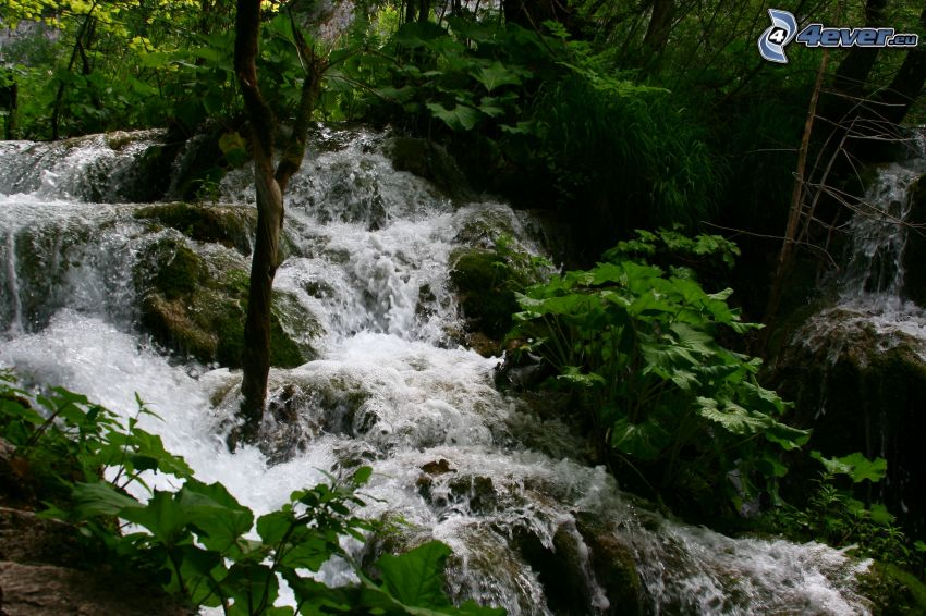 rzeka w lesie, dzika rzeka, zieleń