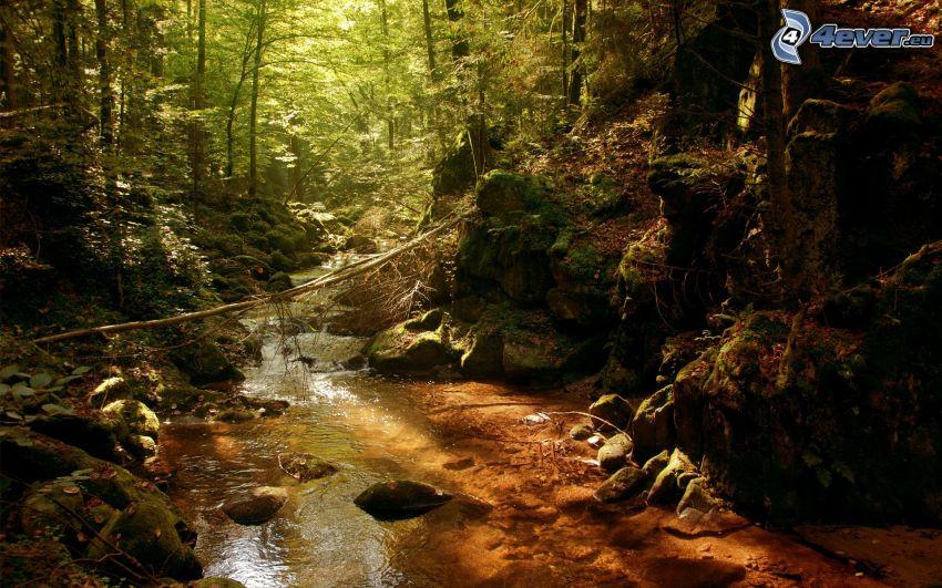 rzeka w lesie, zieleń